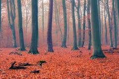 Foggy autumn forest Stock Photos