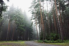 Foggy autumn forest Stock Photo
