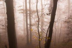 Foggy Autumn Forest. Deciduous forest Stock Photos