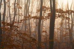 Foggy autumn forest detail Stock Photo