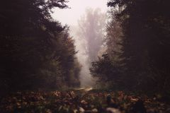 Foggy autumn forest - harmony, relaxation concept Royalty Free Stock Photo
