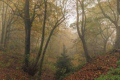Foggy Autumn forest Leaves Stock Photo