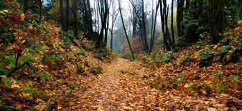 Foggy Autumn Forest Path Stock Photos