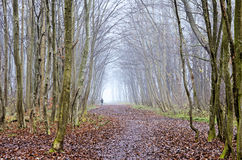 Foggy autumn forest with a path Stock Image