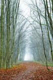 Foggy autumn forest with a path Royalty Free Stock Images