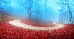 Foggy autumn forest road Stock Photography