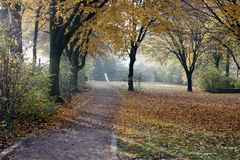 Foggy autumn forest with road and playground Royalty Free Stock Photo