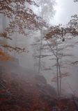 Foggy Autumn Forest Royalty Free Stock Photo