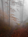 Foggy Autumn Forest royalty free stock images