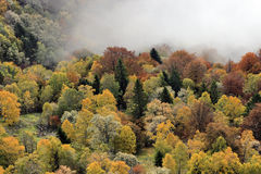 Foggy Autumn Forest Royalty Free Stock Photography
