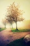 Foggy autumn garden 3. Foggy autumn garden, golden autumn Stock Photos