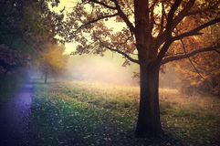 Foggy autumn garden Royalty Free Stock Photos