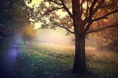 Foggy autumn garden. Golden autumn Royalty Free Stock Photos