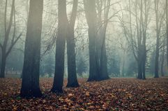 Autumn park in the fog - autumn misty landscape. Foggy autumn landscape. Autumn bare trees in the park in dense fog. Somber gothic autumn background Royalty Free Stock Photography
