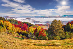 Foggy autumn landscape in Carpathian mountains. Royalty Free Stock Image