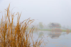 Foggy autumn landscape with a lake, a stilt house and reeds Royalty Free Stock Images