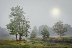 Foggy autumn landscape of trees on river bank in gray cold morning. Big moon is blurred in the fog. Beautiful green nature in early autumn. Sad landscape of stock image