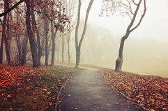 Foggy autumn landscape in vintage tones with bare autumn trees and dry fallen leaves. Stock Photos