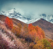 Foggy autumn morning in the Caucasus mountain Royalty Free Stock Image