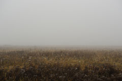 Foggy Autumn Morning in Countryside Royalty Free Stock Photo