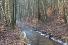 Forest stream at foggy autumn morning royalty free stock photography