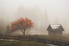 Foggy autumn morning on mountain meadow stock photo