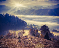 Foggy autumn morning in the mountains. Royalty Free Stock Photography