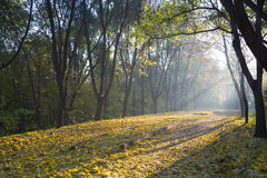 Foggy autumn morning in the park. Royalty Free Stock Images
