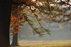 Foggy Autumn morning. Two trees with red, orange and yellow Autumn leaves with a field in front shrouded by fog and white cottages just visible through the fog Royalty Free Stock Image