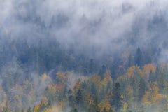 Foggy Autumn in mountains Stock Photos