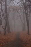 Foggy autumn park Royalty Free Stock Image