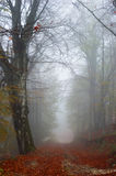 Foggy autumn path. A foggy path in the forest during autumn season Royalty Free Stock Photo