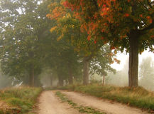 Foggy autumn road Royalty Free Stock Photography