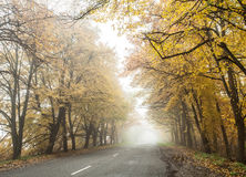 Foggy autumn road. Stock Photo