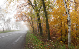 Foggy autumn road. Stock Photos
