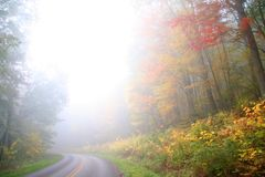 Foggy autumn scene Stock Image