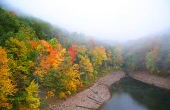 Foggy autumn scene Stock Images