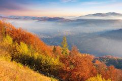 Foggy autumn scenery in mountains at sunrise. Red and yellow foliage on the trees. hazy weather in the valley royalty free stock photos