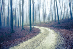 Foggy autumn seasonal forest road with trees Stock Photography
