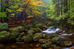 Foggy autumn or summer landscape. Misty foggy morning with river in a valley of Bohemian Switzerland park. Detail of forest. stock photos