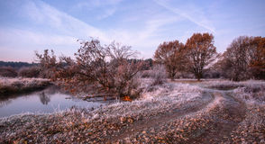 Autumn trees. Red leaves Royalty Free Stock Photos