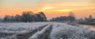 Autumn morning. Frost grass and tree Stock Images