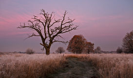 Old tree. Frozen old tree Royalty Free Stock Image