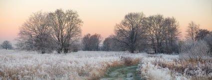 Autumn sunrise. Sunrise with frozen grass Stock Photos