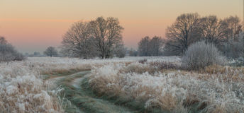 Foggy autumn sunrise. Morning with frozen grass Stock Photography