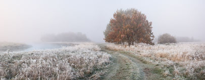 Morning with fog. Sunrise with frozen grass Stock Photos