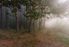 Fog in forest. Autumn forest with fog Stock Photo
