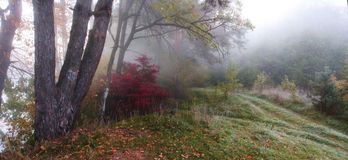 Fog in forrest. Foggy autumn forrest Royalty Free Stock Photography