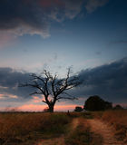 Autumn sunset. Sunset with old tree Stock Images