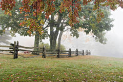 Foggy Autumn Trees and Fence Stock Image